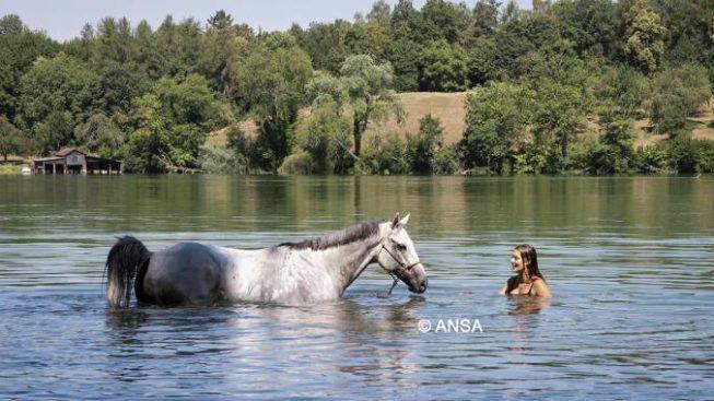 I cavalli e il caldo rovente dell'estate italiana - Cavallo Magazine