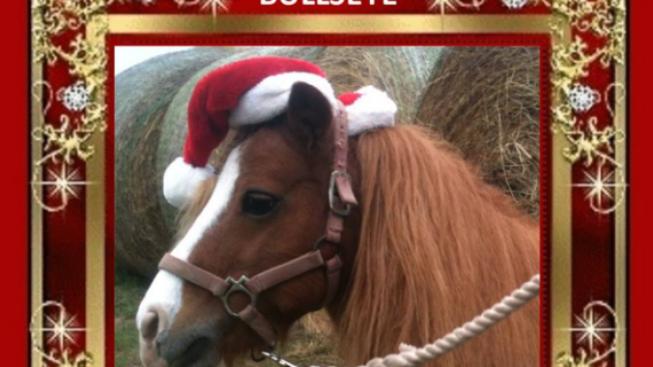 Auguri Di Buon Natale 2021 Video.Texas Un Video Di Auguri Tutto Da Copiare Cavallo Magazine