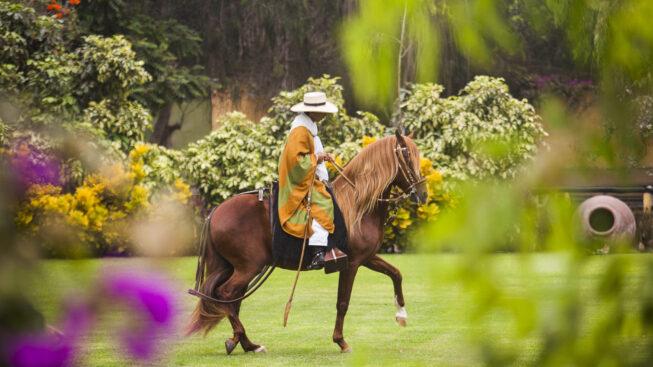 Cavallo Peruviano de Paso nella tenuta Mamacona © Daniel Silva / PromPerù