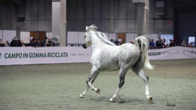 Ecopnues, gomma riciclata per il benessere di cavalli e cavalieri