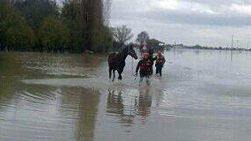 Bologna, tutti all'asciutto i cavalli salvati dall'Idice - CavalloMagazine