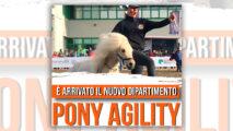 Engea presenta il dipartimento Pony Agility