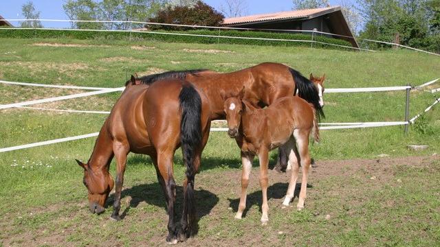 Nastro Antiurto, la sicurezza per i tuoi cavalli - Badi Farm Sumirago (VA)