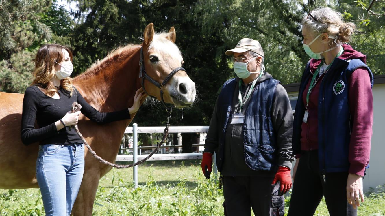 I cavalli aiutano i sanitari dell'Ospedale Niguarda di Milano ©FB ASST Grande Ospedale Metropolitano Niguarda
