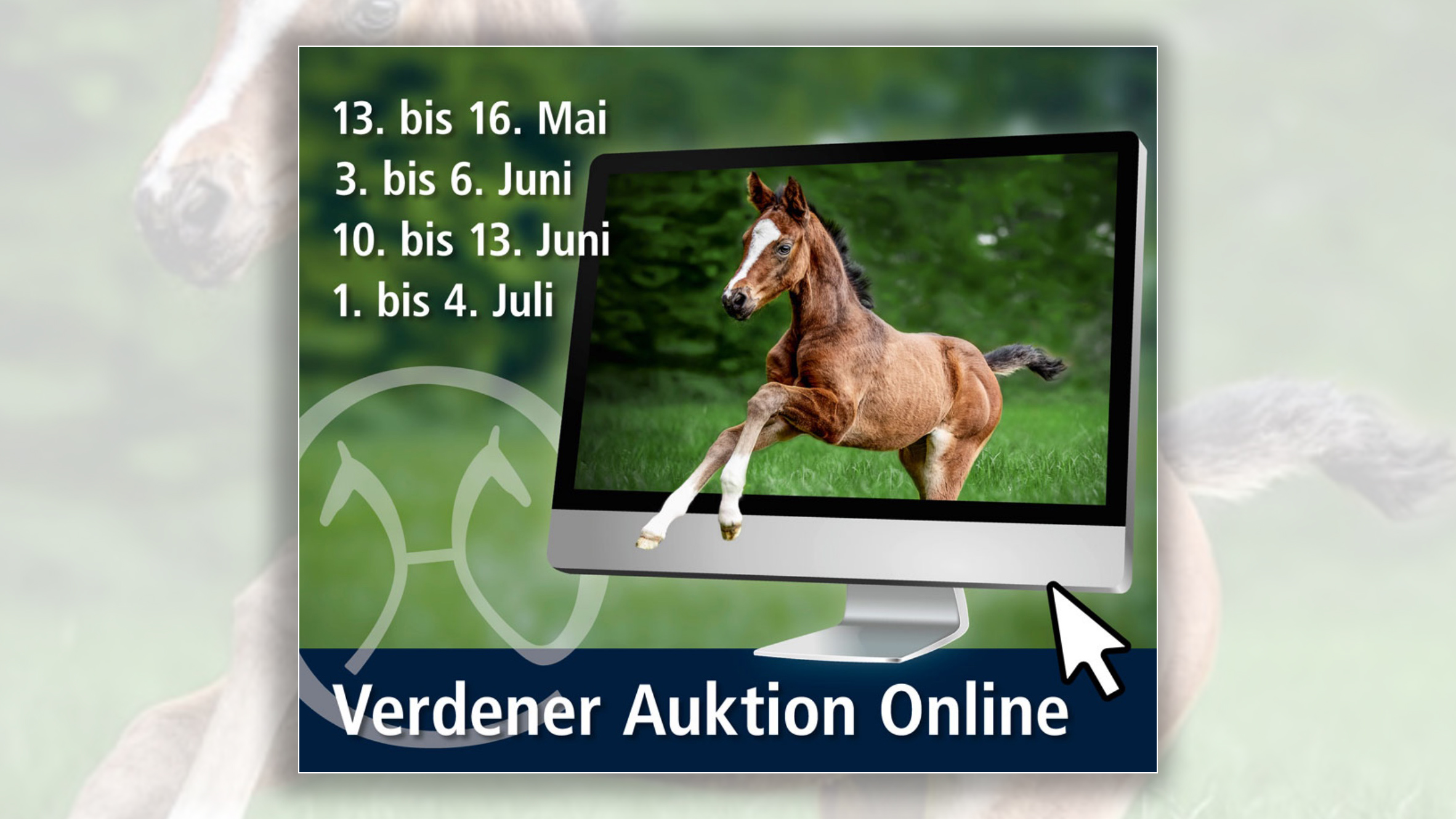 From May to July, customers and friends of the Hannoveraner horse will have the opportunity to buy selected foals at a total of four online auctions