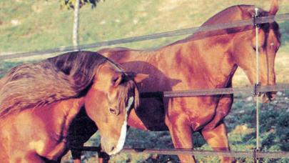 Vuoi lasciare libero il tuo cavallo? É il momento di pensarci…con Badi Farm, il mondo del cavallo