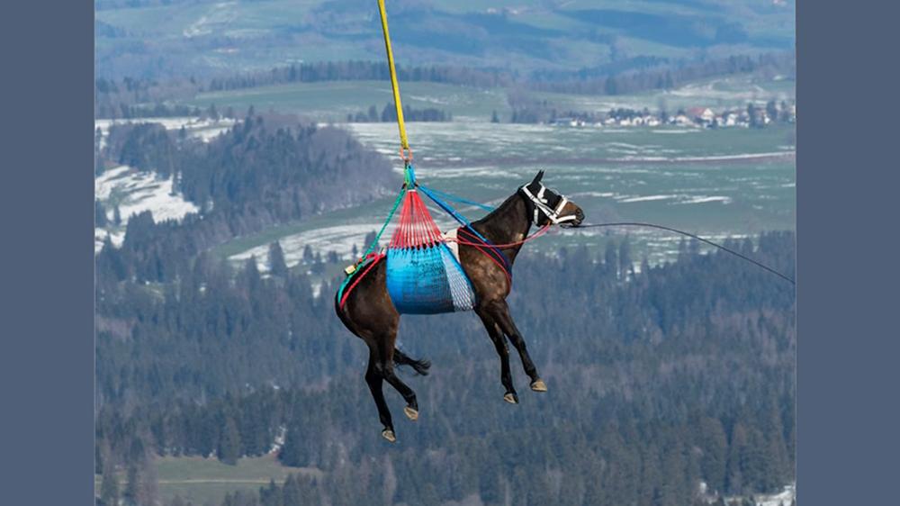 Gli svizzeri volanti
