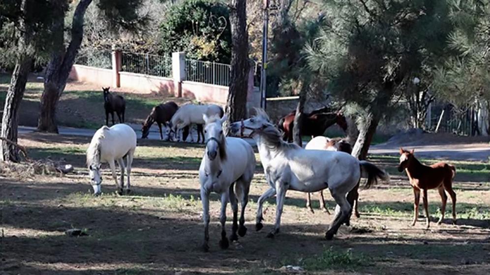 Pasticcio turco