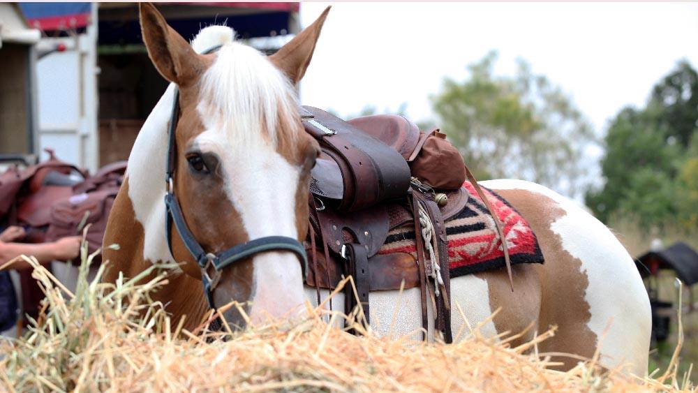 turismo_cavallo